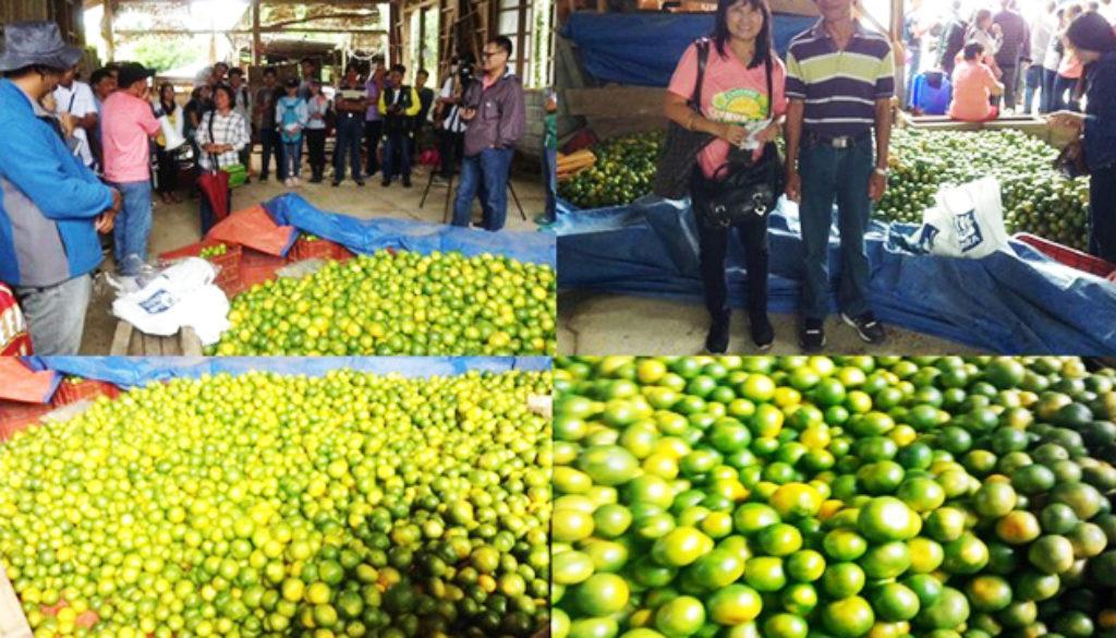 Citrus-1